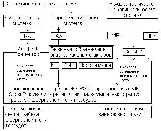 васкулогенная эректильная дисфункция