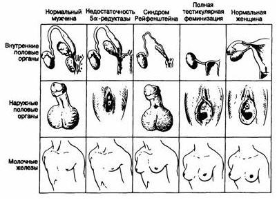 Максим видео типы половых органов женщин